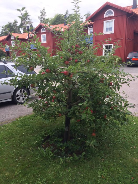 äppelträd ingrid marie
